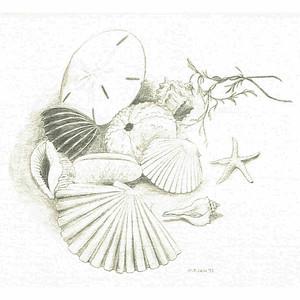 seaShells 8X8