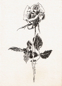 roseCain