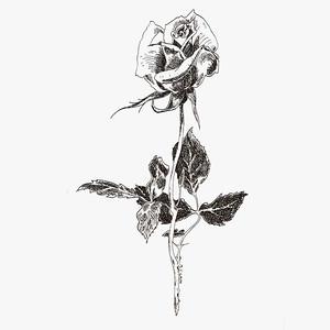 roseCain 8X8