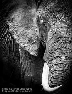 Masai Mara elephant picture