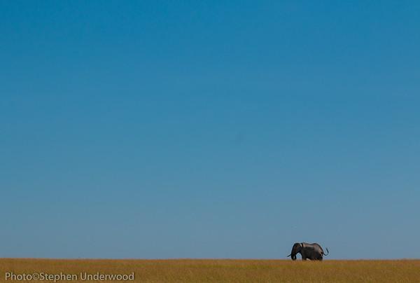 Masai Mara African elephant photo