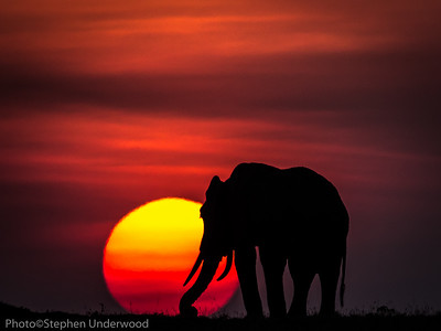 Maasai Mara African elephant sunset photo