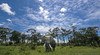 Picture of Masai Mara African elephant