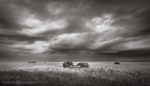 Maasai Mara African elephants