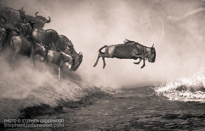 A wildebeest leaps into the Mara River