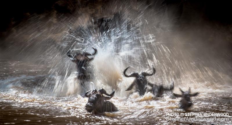 Wildebeest in the Mara River