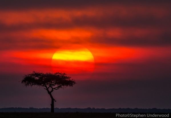 Masai Mara African sunset picture