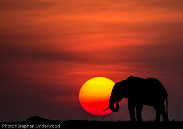 Elephant and a beautiful Masai Mara sunset