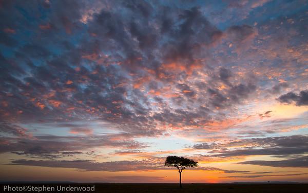 Dawn over the Masai Mara plains