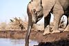 Elephants_At_Matabole_Hide_Mashatu_2019_Botswana_0003