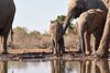 Elephants_At_Matabole_Hide_Mashatu_2019_Botswana_0018
