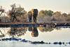 Elephants_At_Matabole_Hide_Mashatu_2019_Botswana_0001