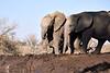 Elephants_At_Matabole_Hide_Mashatu_2019_Botswana_0011