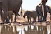 Elephants_At_Matabole_Hide_Mashatu_2019_Botswana_0019
