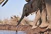 Elephants_At_Matabole_Hide_Mashatu_2019_Botswana_0016