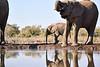 Elephants_At_Matabole_Hide_Mashatu_2019_Botswana_0007