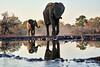 Elephants_At_Matabole_Hide_Mashatu_2019_Botswana_0002