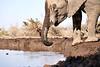 Elephants_At_Matabole_Hide_Mashatu_2019_Botswana_0004