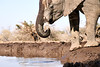 Elephants_At_Matabole_Hide_Mashatu_2019_Botswana_0005
