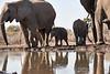 Elephants_At_Matabole_Hide_Mashatu_2019_Botswana_0020