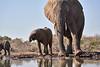 Elephants_At_Matabole_Hide_Mashatu_2019_Botswana_0014