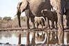 Elephants_At_Matabole_Hide_Mashatu_2019_Botswana_0013