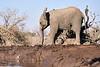 Elephants_At_Matabole_Hide_Mashatu_2019_Botswana_0009