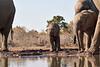 Elephants_At_Matabole_Hide_Mashatu_2019_Botswana_0017