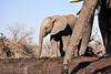 Elephants_At_Matabole_Hide_Mashatu_2019_Botswana_0012
