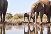 Elephants_At_Matabole_Hide_Mashatu_2019_Botswana_0008