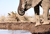Elephants_At_Matabole_Hide_Mashatu_2019_Botswana_0006