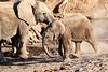 Young_Elephant_Running_To_Water_Mashatu_2019_Botswana_0009