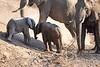 Baby_Elephant_Greetings_Mashatu_2019_Botswana_0008