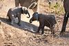 Baby_Elephant_Greetings_Mashatu_2019_Botswana_0005
