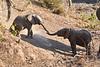 Baby_Elephant_Greetings_Mashatu_2019_Botswana_0001