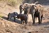 Baby_Elephant_Greetings_Mashatu_2019_Botswana_0009