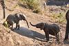 Baby_Elephant_Greetings_Mashatu_2019_Botswana_0002