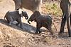 Baby_Elephant_Greetings_Mashatu_2019_Botswana_0007