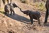 Baby_Elephant_Greetings_Mashatu_2019_Botswana_0004