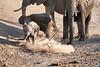 Baby_Elephant_Greetings_Mashatu_2019_Botswana_0011