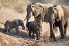 Baby_Elephant_Greetings_Mashatu_2019_Botswana_0010