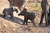 Baby_Elephant_Greetings_Mashatu_2019_Botswana_0006