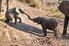 Baby_Elephant_Greetings_Mashatu_2019_Botswana_0003