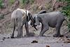 Elephant_Jousting_Mashatu_2019_Botswana_0009