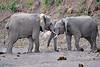 Elephant_Jousting_Mashatu_2019_Botswana_0013