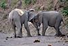 Elephant_Jousting_Mashatu_2019_Botswana_0011
