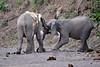 Elephant_Jousting_Mashatu_2019_Botswana_0008