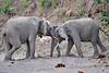 Elephant_Jousting_Mashatu_2019_Botswana_0014