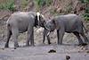 Elephant_Jousting_Mashatu_2019_Botswana_0012