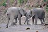 Elephant_Jousting_Mashatu_2019_Botswana_0018